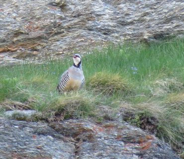 Rock Partridge